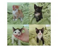 4 очаровательных котенка ищут добрые ручки и теплый дом!