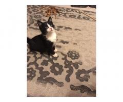 В добрые руки (котёнок 4 мес. ищет новый дом).
