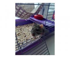 Крыса мальчик с клеткой