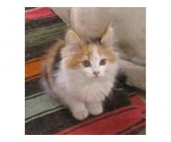 ВОЗЬМУ миленького котёночка