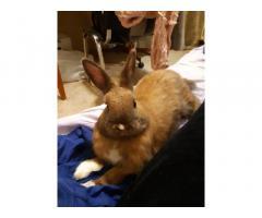 Кролик - Пирожок