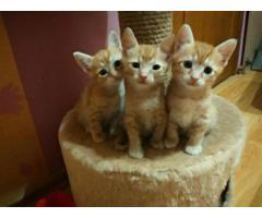 3 братика ищут хозяина