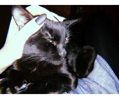 Отдам кота в хорошие руки.