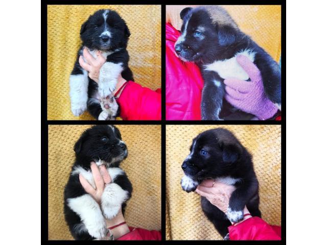 Красивые щенки бесплатно